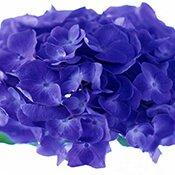 02-blue-flower-175
