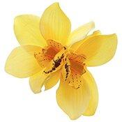 03-yellow-flower-175