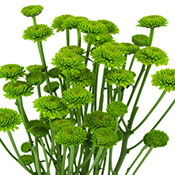 04-green-flower-175