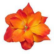 06-orange-flower-175