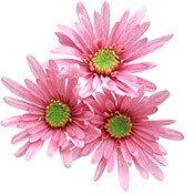 07-pink-flower-175