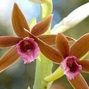 11-brown-flowers-175
