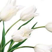 10-white-flowers-175